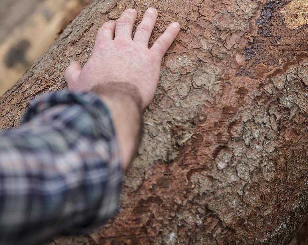 Bois de Chartreuse - bois massif durable et économique
